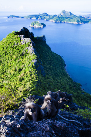 Amazing summer landscape with mountains sea blue sky sun and beautiful,Viewpoint Prachuap Bay.The dusky leaf monkey, spectacled langur, or spectacled leaf monkey.