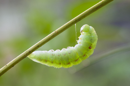 Close-up of a hairy caterpillar on natural background Stock Photo