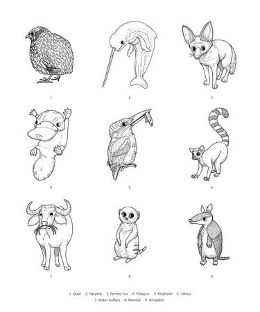 vector illustration of wildlife animal isolated on white background