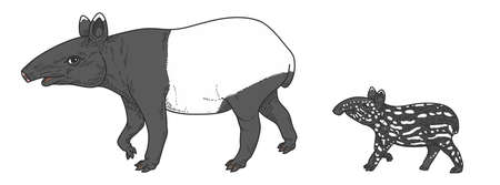 vector illustration of tapir isolated on white background