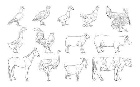 vector illustration of farm animal isolated on white background