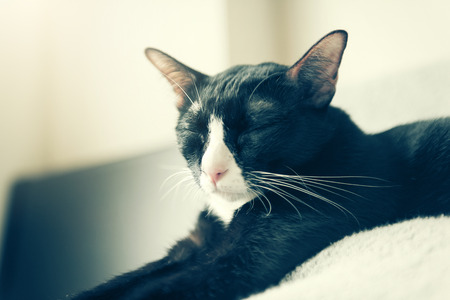 foreleg: Retro vintage stone process.Cute cat with selective and soft focus in bed. Stock Photo