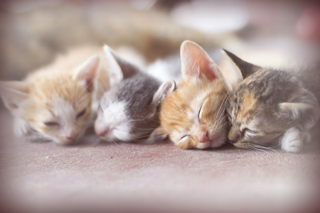 Sweet moment A group of different kitten sleeping on the floor.In soften and selective focus.