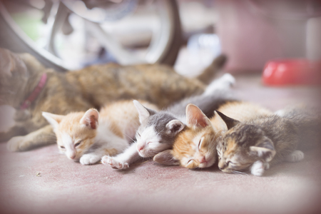 soften: Sweet moment A group of different kitten sleeping on the floor.In soften and selective focus.