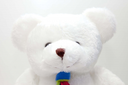 white bears doll on white background isolated photo