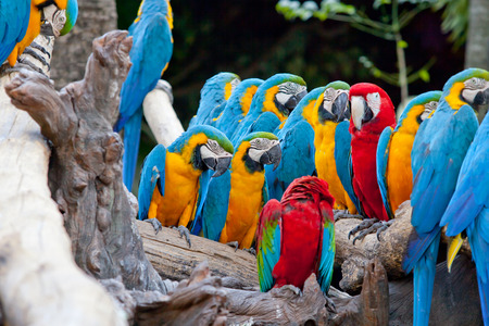 costa: beautiful Scarlet macaw