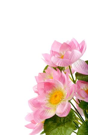 lotus flowers isolated white background photo