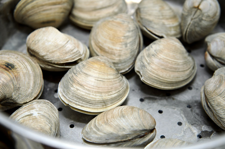 Clams cooked in steamer Stok Fotoğraf