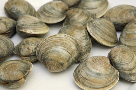 Fresh clams on white plate Stock Photo