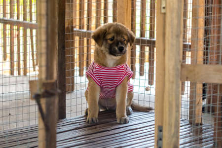 Puppy sit and calm in a cage, wearing a red-white strip shirt in a cold wheather. Stock Photo