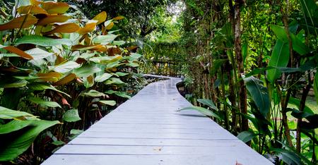 White wooden walkway in a beautiful tropical garden, Panorama view