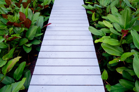 White wooden walkway in a beautiful tropical garden