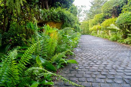 Cobble stone walkway in a beautiful tropical garden