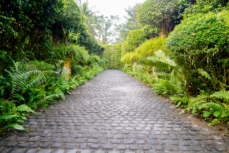 Pasarela de adoquines en un hermoso jardín tropical