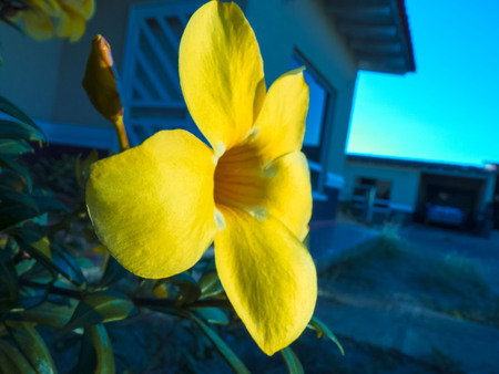 the yellow flower showing strength and determination