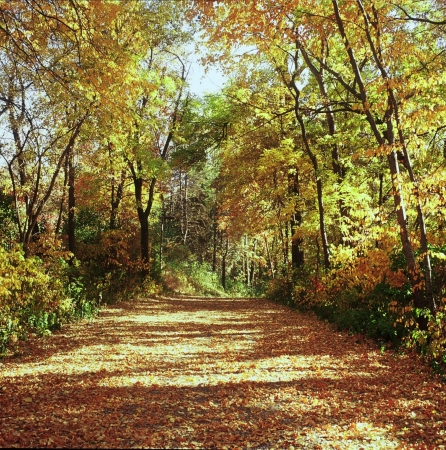 A Trail Story - Plymouth, MN