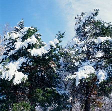 Spring Hanging Snowfall Stok Fotoğraf