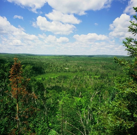 overlook: Wolf Ridge Overlook - Finland State Forest,MN