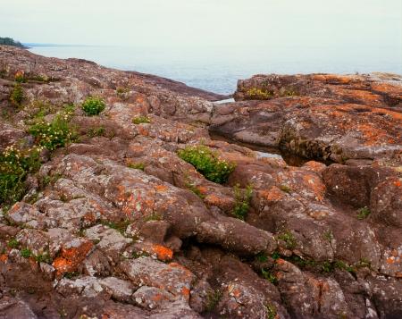 festooned: Lichen Festooned Rockscape - Minnesota