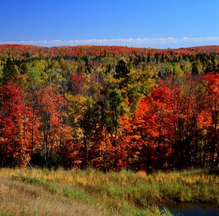 秋カラー パレット - 優れた国有林 (ミネソタ州)