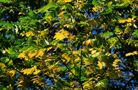 Bright Green and Yellow Leaf Canopy
