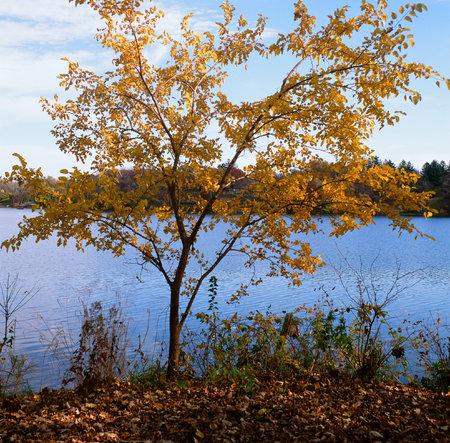 minnesota: Autumn Lakeshore Vista - Roseville, Minnesota