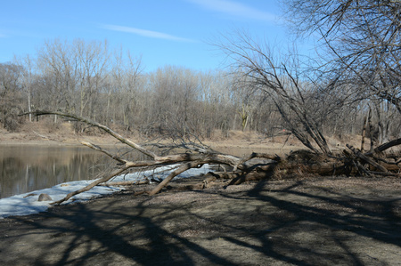 wooded: Early spring at the Mississippi River, and bare wooded riverbanks. Stock Photo
