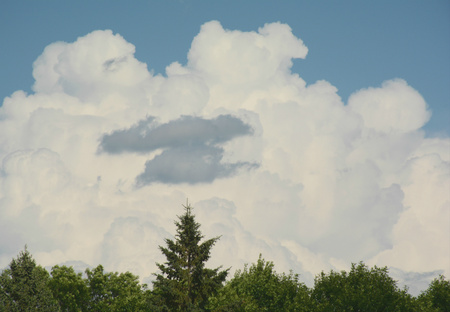 cloud formations: High cumulus cloud formations over evergreen trees.