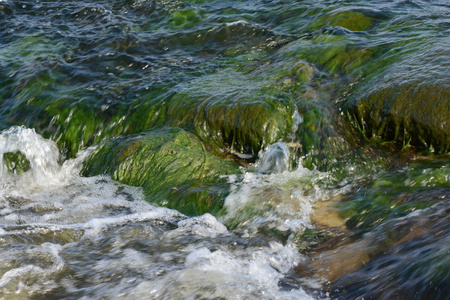 Lake riffles flowing rapidly over moss covered rocks.