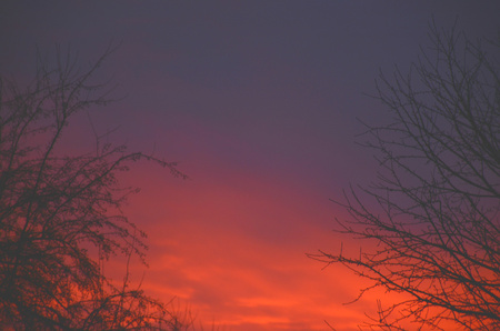 前景の木のてっぺんでカラフルな冬の夕日。 写真素材 - 77382265