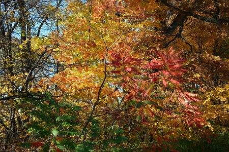 Variety of partially shaded colorful autumn foliage.