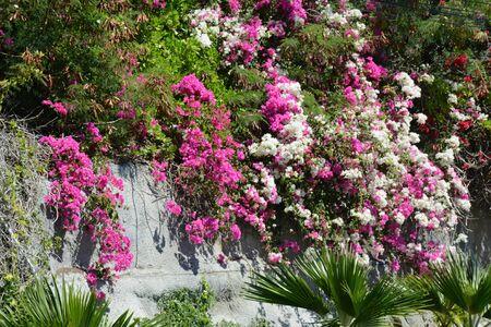 Colorful flowers and green foliage on Oahu Island, HI. Banco de Imagens