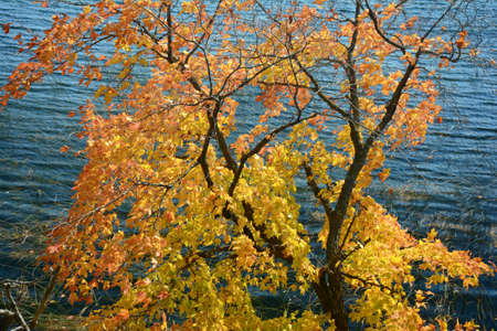 Colorful autumn tree foliage situated above a freshwater lake shore. Standard-Bild