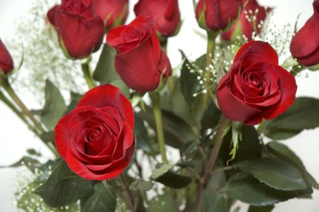 dozen: Dozen roses for Valentines or any other occasion