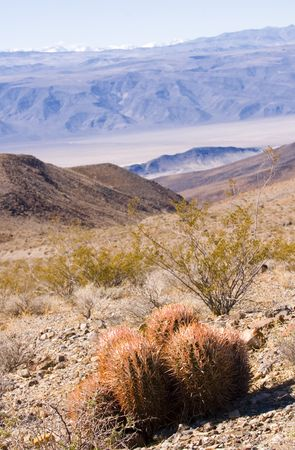 cactus growing in death valley showing that some things live there photo