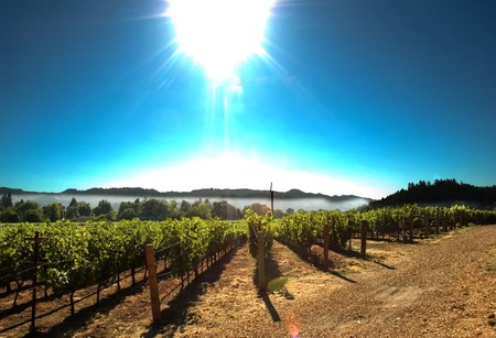 Sun over Napa Valley burning off the morning mist