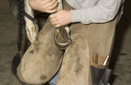 horse pull: Farrier removing old shoe from horses hoof Stock Photo