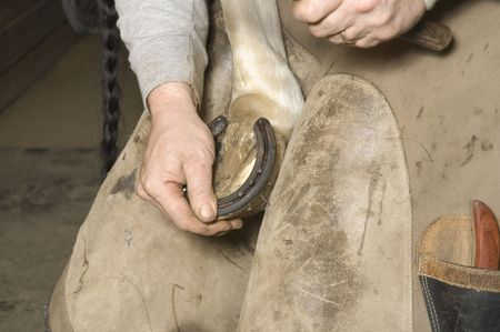 attaching: Farrier nailing horse shoe on horses hoof Stock Photo