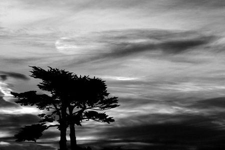 Dark ominous foreboding sky over a group of cypress trees