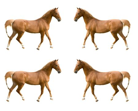 multiple images of a Saddlebred horse