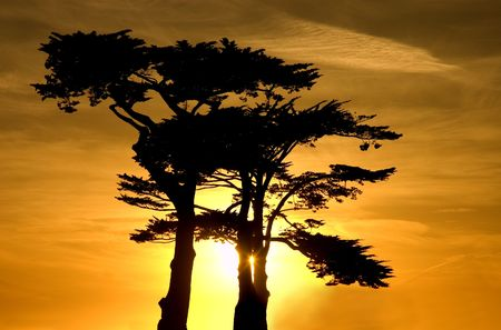 Beautiful Sunset over a cypress grove in Santa Cruz that is reminiscent of african sunsets photo