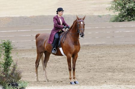 livery: Woman riding Saddlebred horse in English livery
