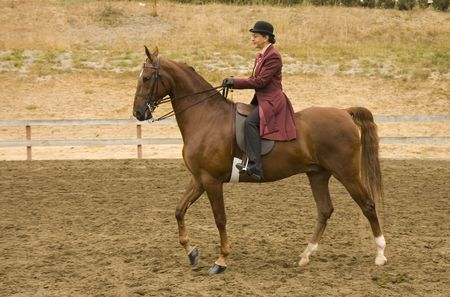 image of a saddlebred horse in English livery
