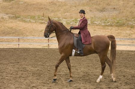 livery: Woman riding a saddlebred horse in English livery