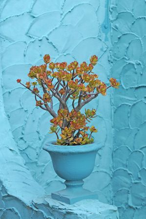 jade plant: Jade plant in turquoise pot on against a tuquoise colored stucco wall Stock Photo