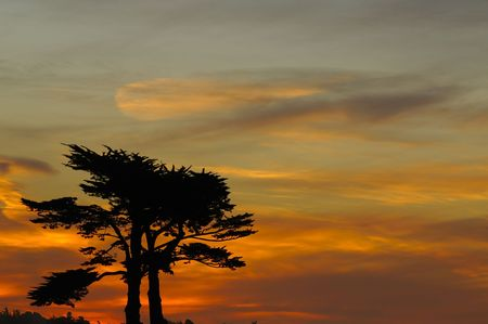 Sunset with a pair of Cypress trees sihouetted against an African sky photo