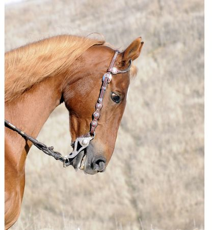 livery: Head of a Saddlebred horse in Western livery Stock Photo
