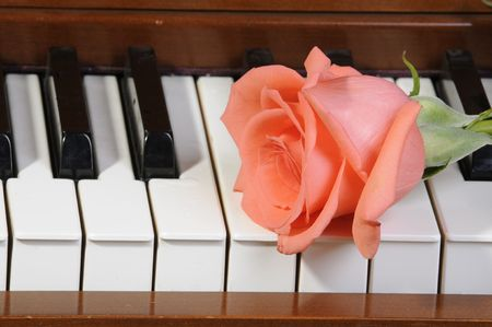 accompaniment: peachpink colored Rose sitting on keys of piano Stock Photo