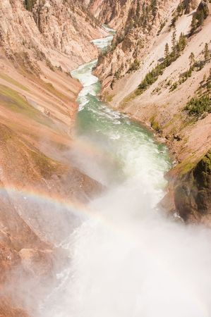 treed: View of the Grand canyon of Yellowstone park fro the top of the lower falls with a rainbow in the mist