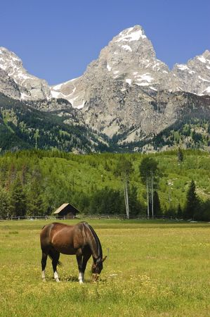 horse in a pastoral paddock at the base of the Tetons photo